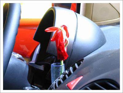 02142005_beetle.jpg