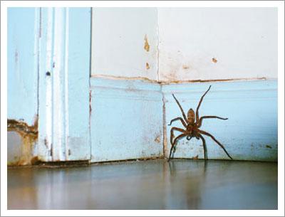 03192004_spider.jpg