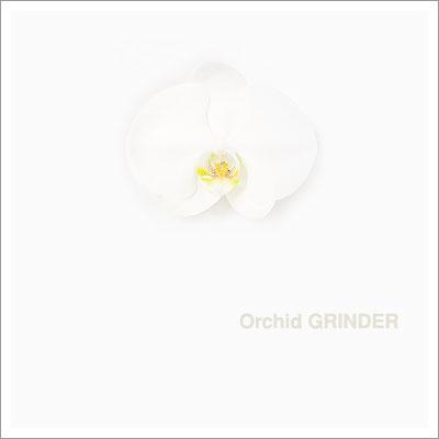 04232004_orchid.jpg