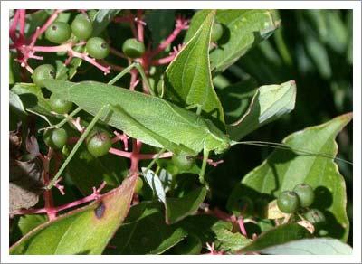 09092003_leaf.jpg