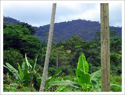 09232003_jungle.jpg